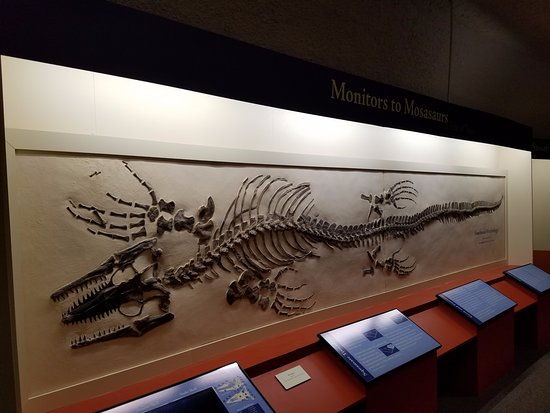 Hays, KS: Marine dinosaur fossil at the Sternberg Museum.