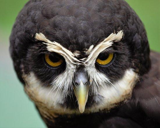 Duncan, Canadá: Owl