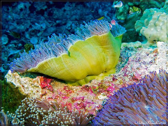 Christmas Tree Worms On Dive Site Red Rock Picture Of Scuba Birds