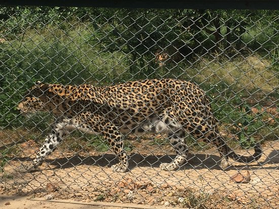 Sajjangarh Wildlife Sanctuary