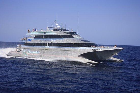 Quicksilver Cruises Picture Of Quicksilver Cruises Port