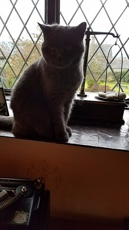 Holmrook, UK: Lucy the beautiful British Short Haired kitty