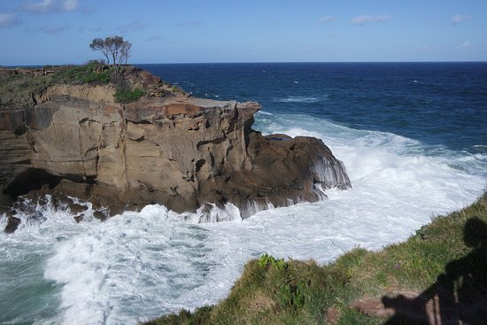 Cams Wharf, أستراليا: Snapper Point, you can drive all the way, we saw a pod of whales