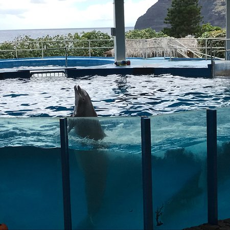 Sea Life Park Hawaii: photo8.jpg