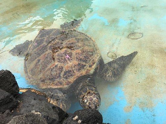 Sea Life Park Hawaii: photo9.jpg
