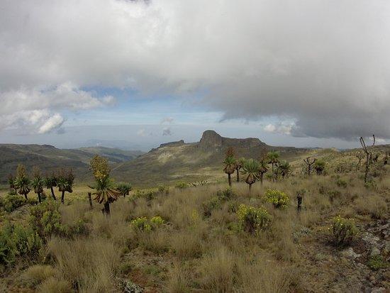 Восточный регион, Уганда: Jackson's Peak