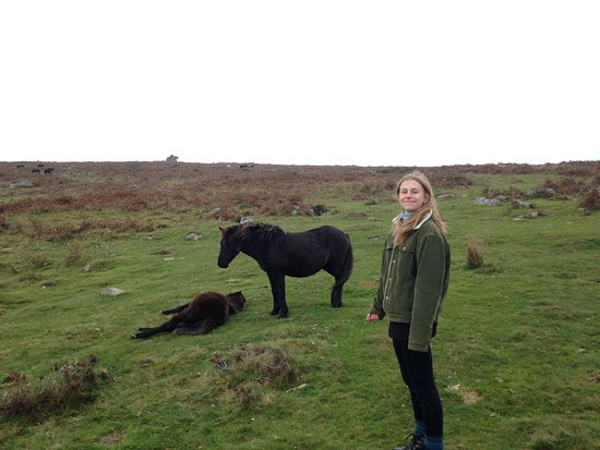 Easdon Cottage: Ponies near Saddle Tor.