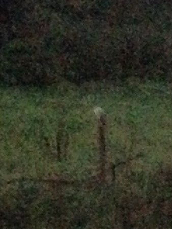 Easdon Cottage: Barn owl right outside - shot with phone (forgot my camera)