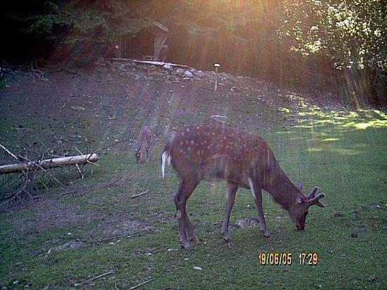 Oberried, Tyskland: It looks a deer.