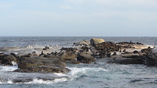 Cape Town Day Tours: Seal Island