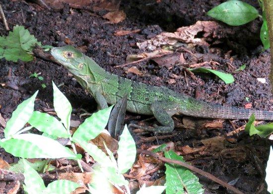 هاسيندا جواشيبيلين: Viewed just outside our room, also a cane toad and several birds