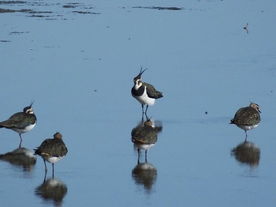 Oare, UK: You can see a good mixture of birds