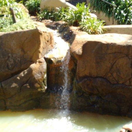 Caledon, Sudáfrica: IMG-20161024-WA0010_large.jpg