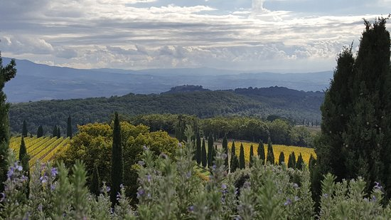 Montalcino Resmi