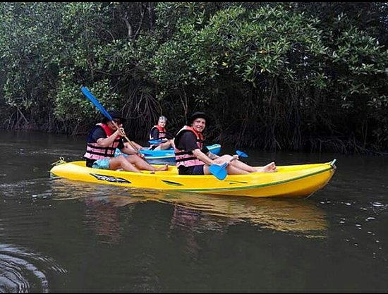 ‪Mangrove Kayaking‬
