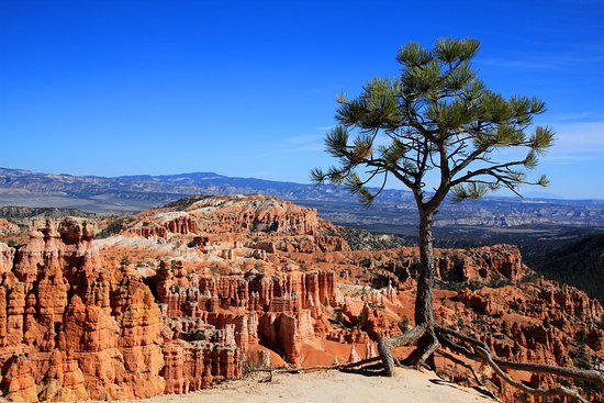 Bundu Bashers Private Day Tours: Bryce Canyon on the way from Sunrise Point to Sunset Point