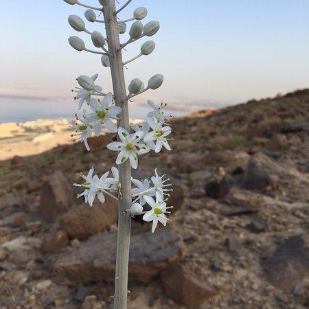 Цветущий лук в горах