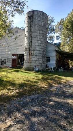 Gloucester, VA: 10 Barns filled with junk and antiques