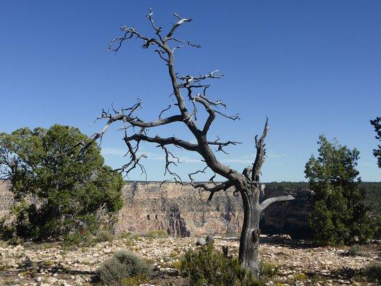 Tusayan, AZ: Point de vue sur le sentier