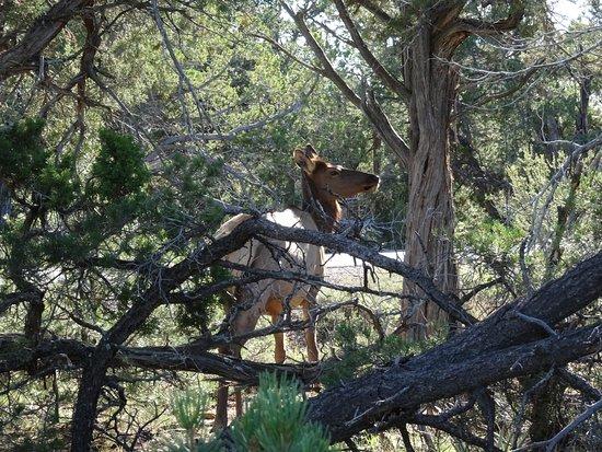 Tusayan, AZ: Hermit's trail traverse la forêt