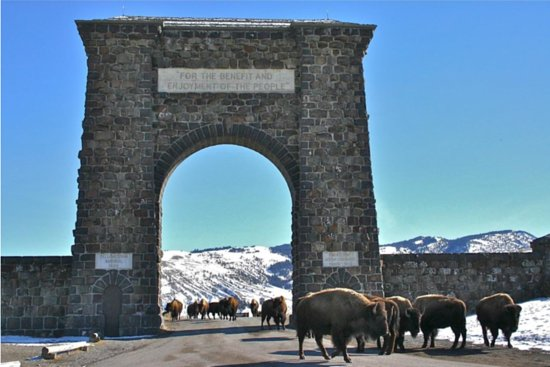 Gardiner, MT: Entrance to Yellowstone National Park with Bison
