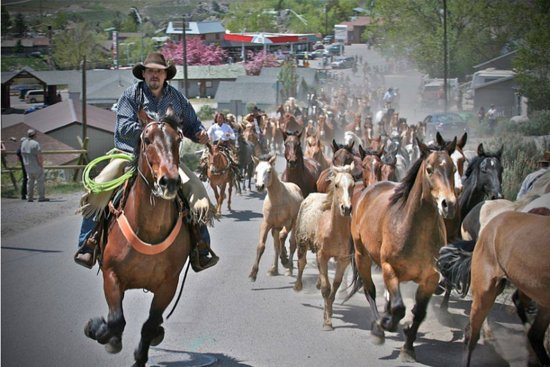 Gardiner, MT: Horse Drive