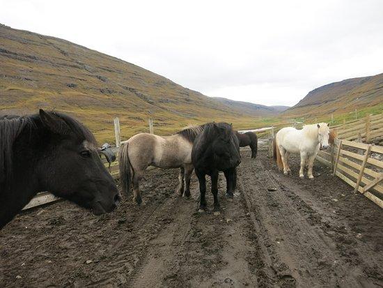 Egilsstadir, Island: Horse Corral at the Wilderness Center