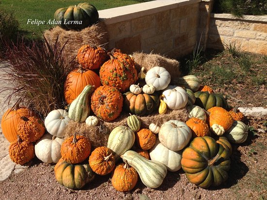 Stonewall, TX: A wide variety of pumpkins decorated the entrance walks and bridge to Becker Vineyards.