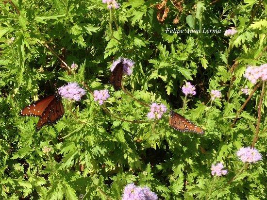 Stonewall, TX: Entrance walk to Becker Vineyards alive w/butterflies swirling flower to flower at Becker Vineya