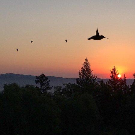 Napa Valley, CA: Hummers and balloons