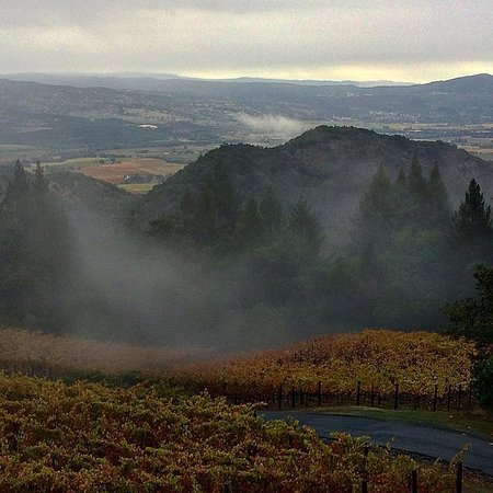 Napa Valley, CA: Morning and it is foggy