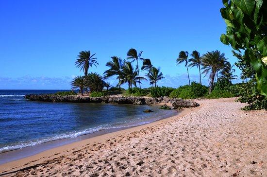 Кахуку, Гавайи: Haleiwa - turtle beach