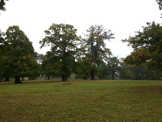 Woburn Abbey and Gardens: 20161027_113514_large.jpg