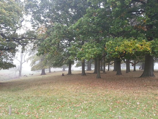 Woburn Abbey and Gardens: 20161027_102819_large.jpg