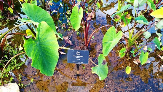 Kilauea, Hawái: minigolf & gardens