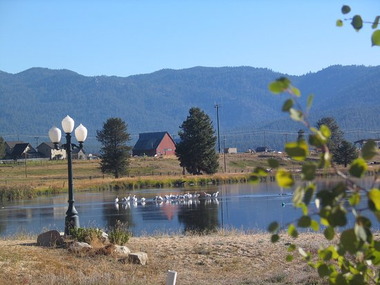 Cascade, ID: Are those pelican's out there?  They look like swans.