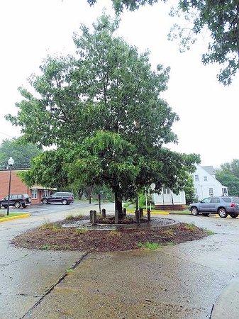 Wilkesboro, NC: where the tory oak originally stood