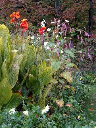Wayne, Pensylwania: Canna, daisies & persicaria, Oct 2016