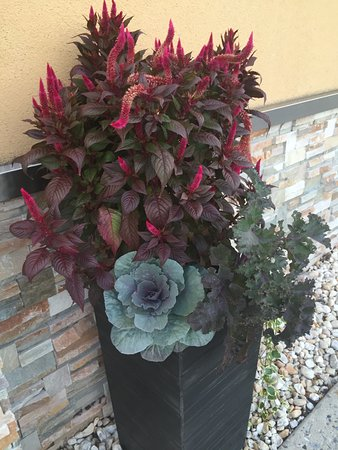 Baker's Restaurant: Pretty plantings