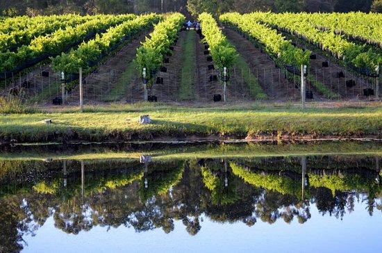 Vineyards in Plettenberg Bay