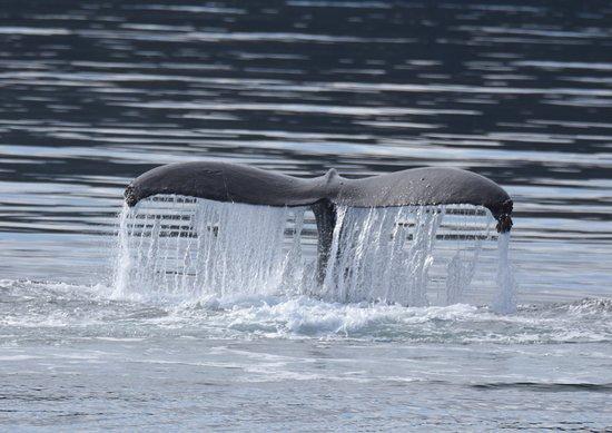 Port McNeill, Canadá: Whale
