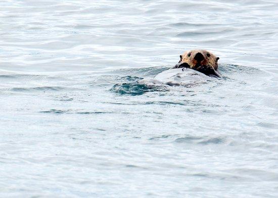 Port McNeill, Canadá: Sea Otter