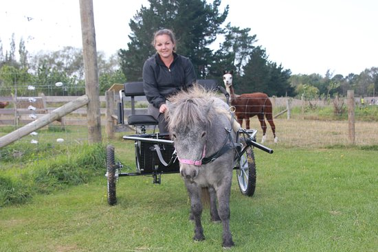 Timaru, Nouvelle-Zélande : Jo and Misty out for a walk
