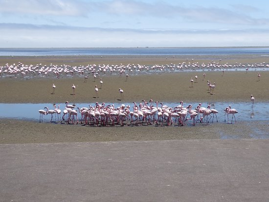 Walvis Bay, Namibië: just one part of the flock