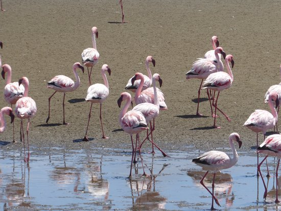 Walvis Bay, Namibië: in awe of these beautiful creatures