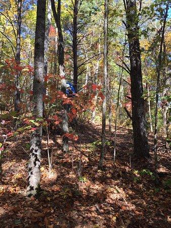 Scaly Mountain, NC: photo1.jpg