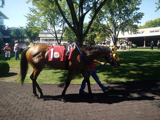 Arlington Heights, IL: Horse walk before race