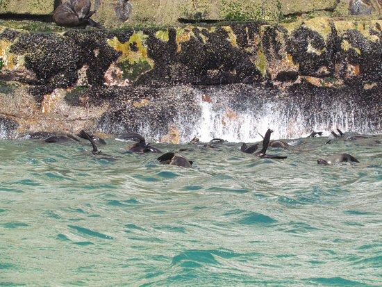 Plettenberg Bay, Sudáfrica: Focas