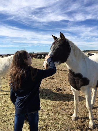 The Black Hills Wild Horse Sanctuary : Thrilled to be able to pet some.