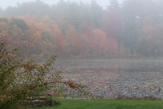 On Cranberry Pond Bed and Breakfast: View from the huge deck on a foggy morning.